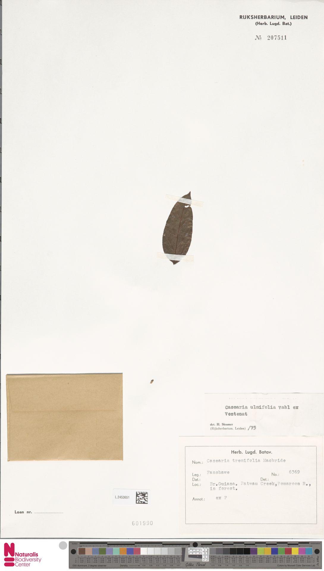 L.2453651 | Casearia ulmifolia Vahl ex Vent.