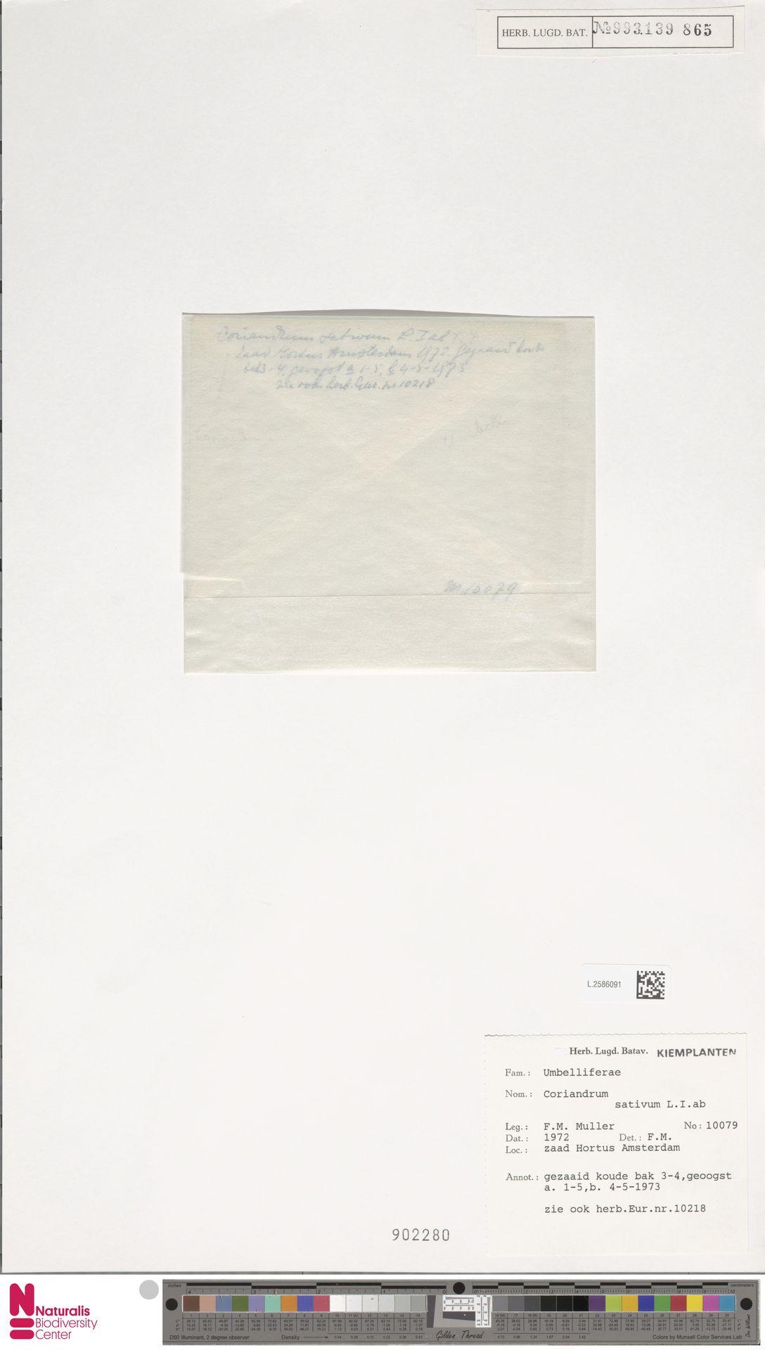 L.2586091 | Coriandrum sativum L.