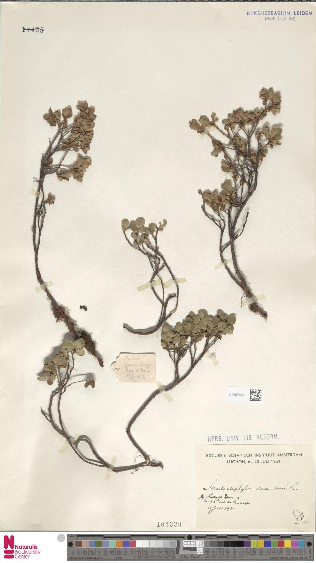 L.2603559 | Arctostaphylos uva-ursi (L.) Spreng.