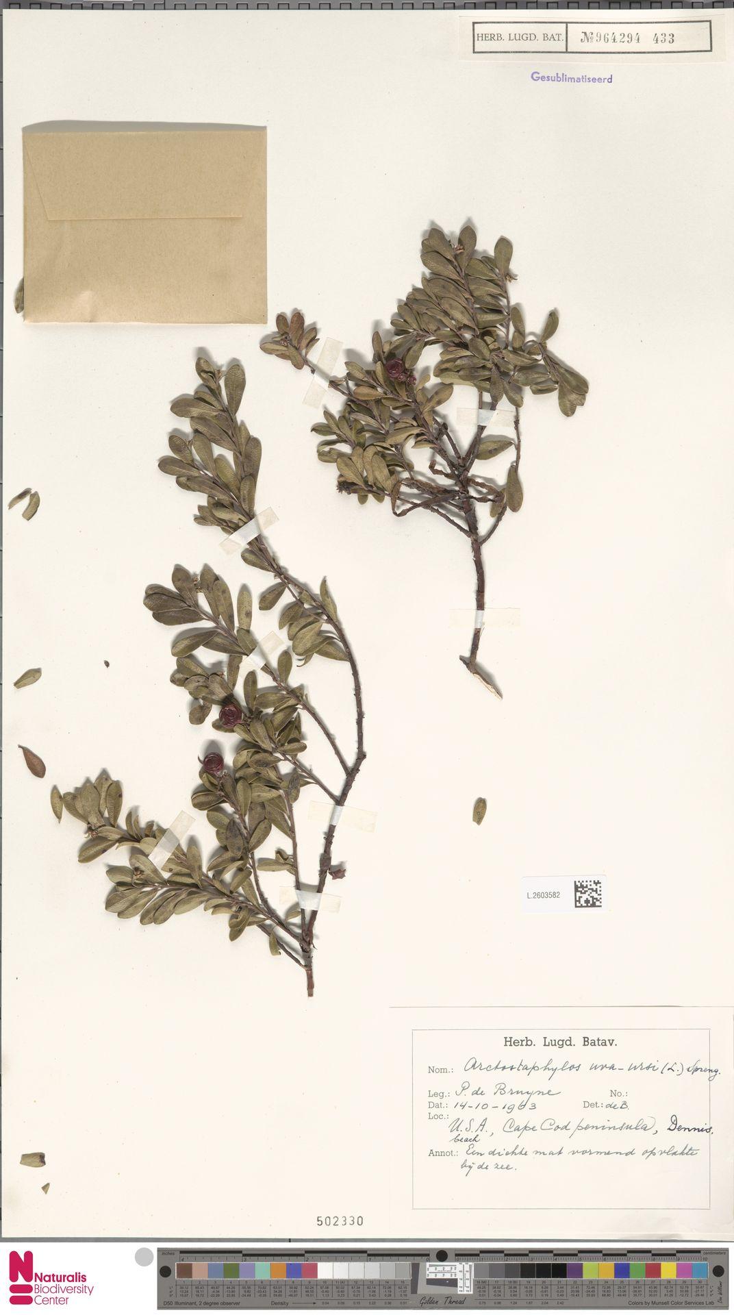 L.2603582 | Arctostaphylos uva-ursi (L.) Spreng.