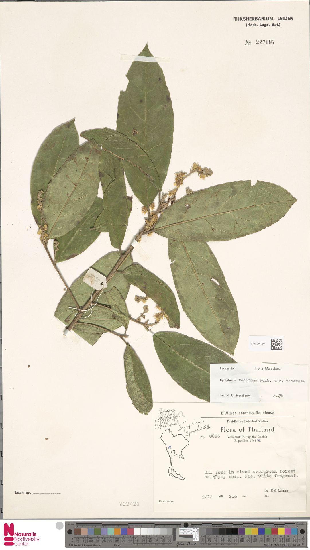 L.2672332   Symplocos racemosa var. racemosa