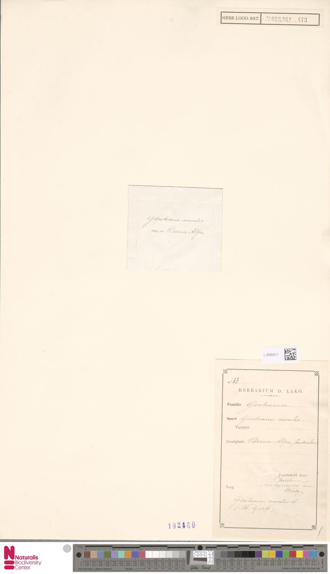 L.2695917 | Gentiana nivalis L.