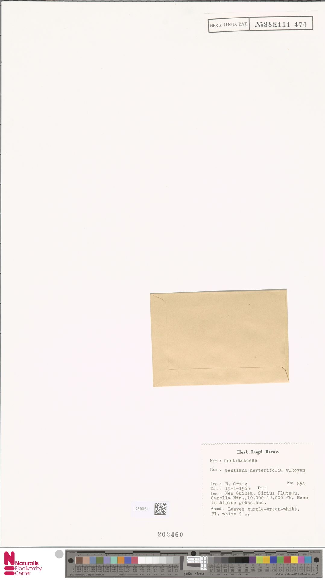 L.2696061 | Gentiana nerterifolia P.Royen