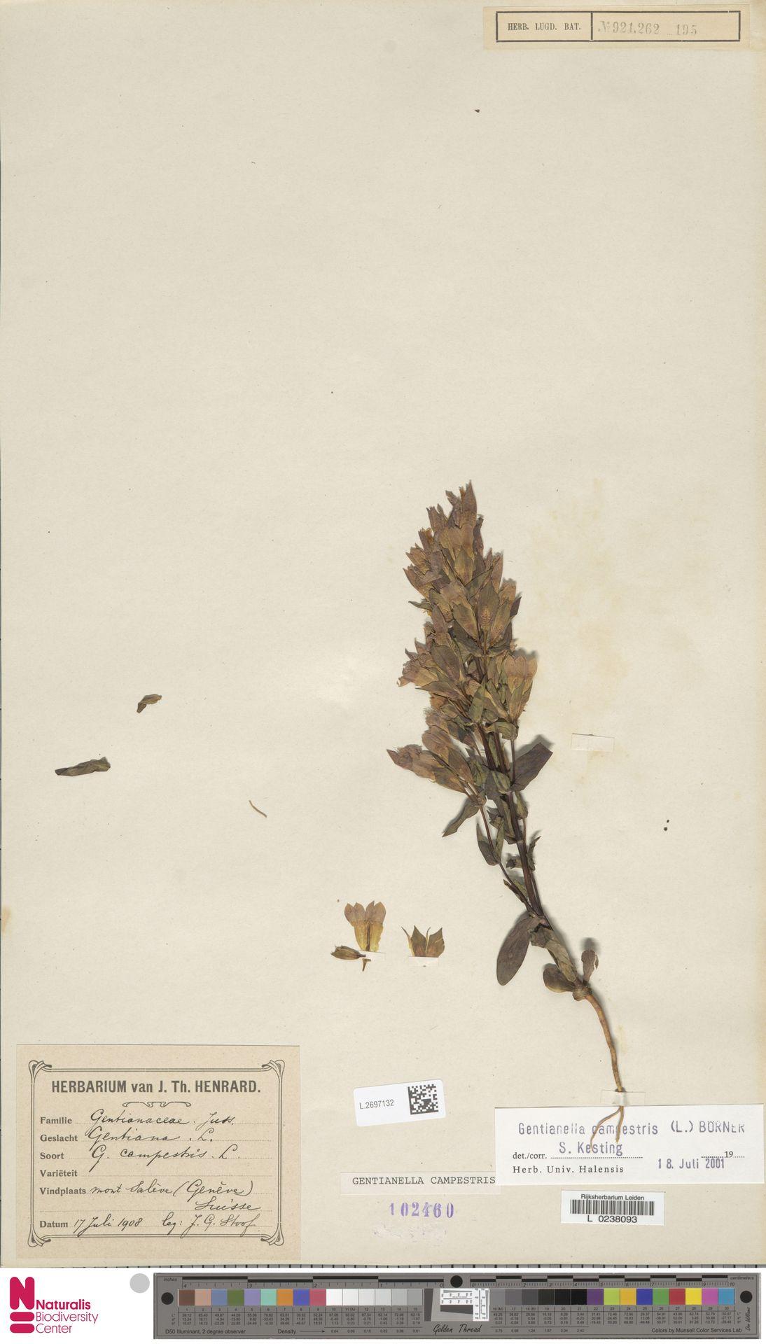 L.2697132   Gentianella campestris (L.) Börner