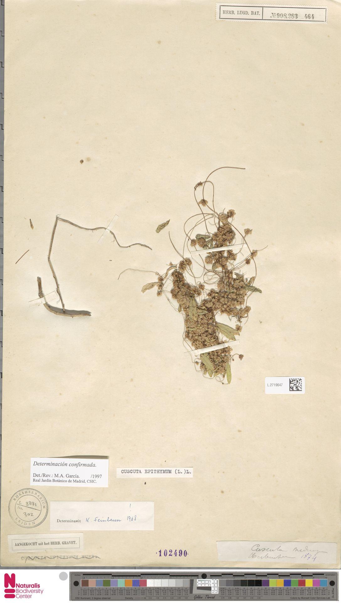 L.2719647 | Cuscuta epithymum (L.) L.