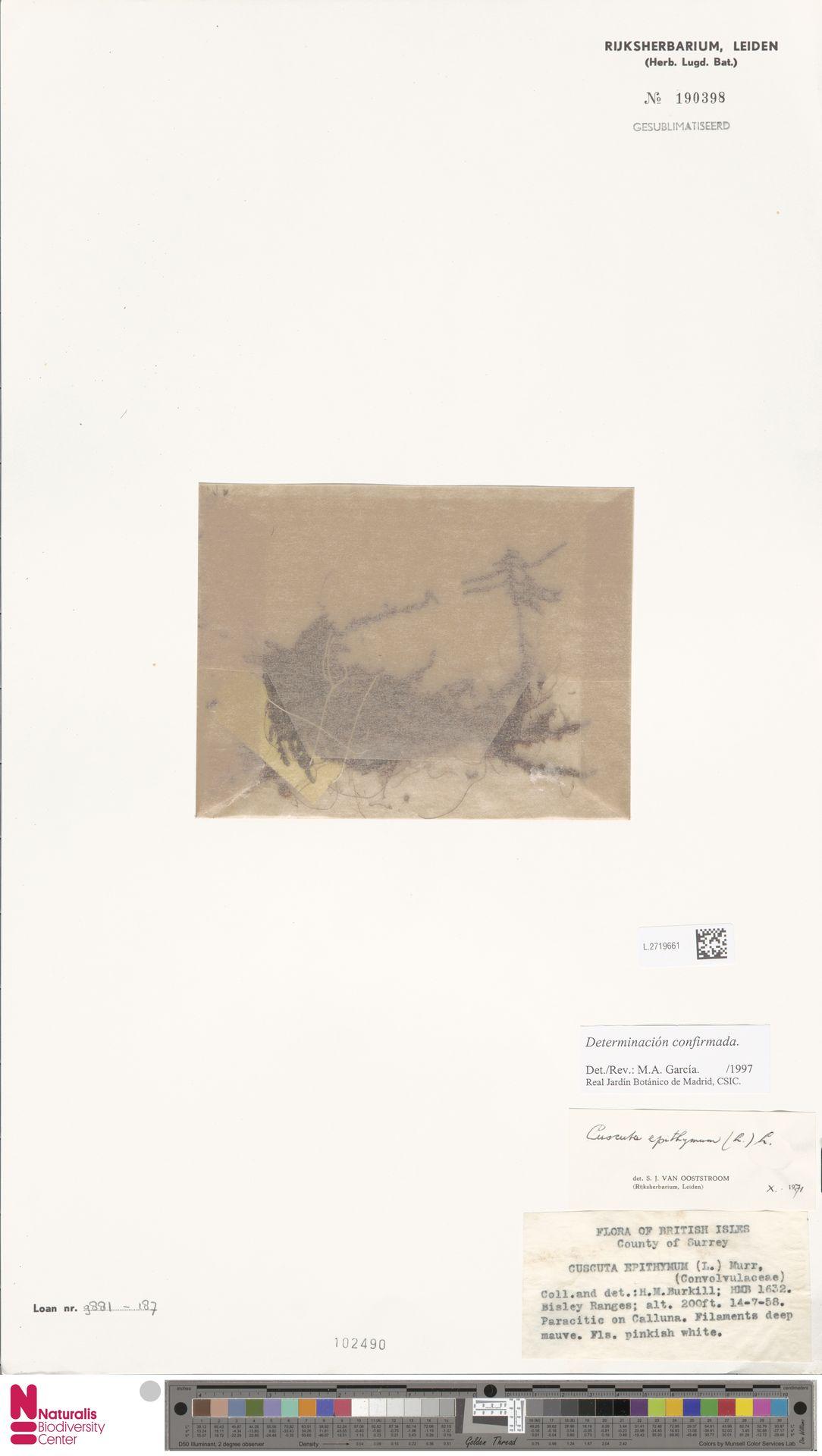 L.2719661   Cuscuta epithymum (L.) L.