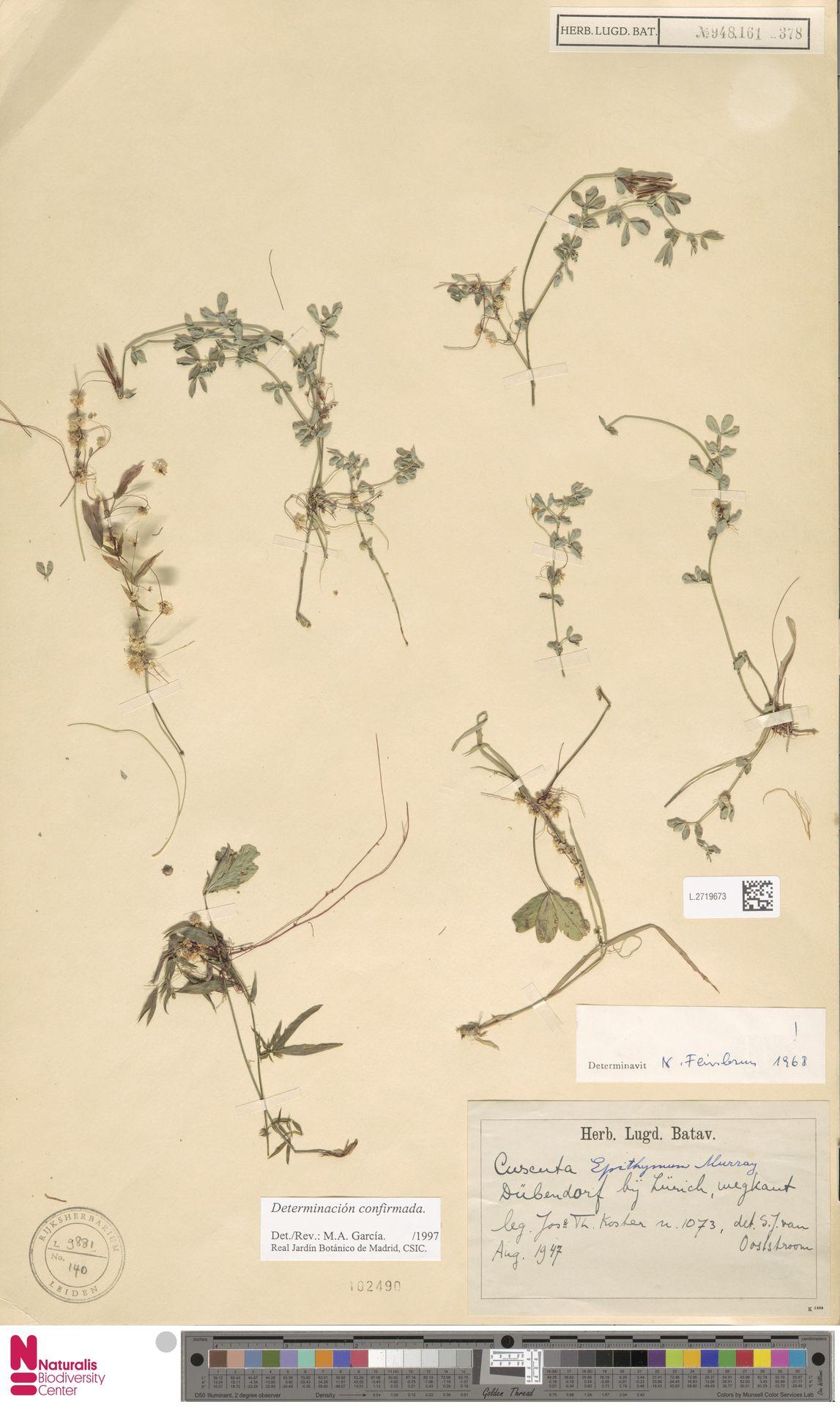 L.2719673 | Cuscuta epithymum (L.) L.