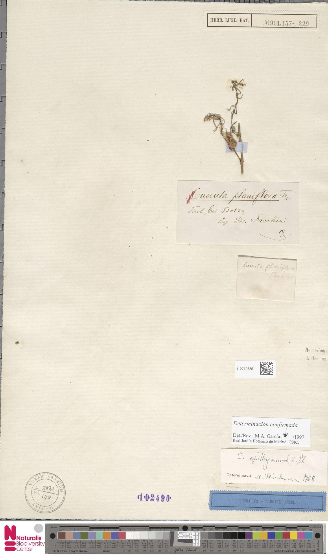 L.2719686   Cuscuta epithymum (L.) L.