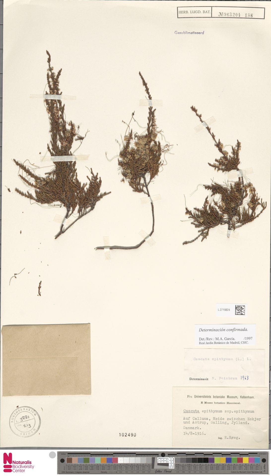 L.2719824 | Cuscuta epithymum (L.) L.