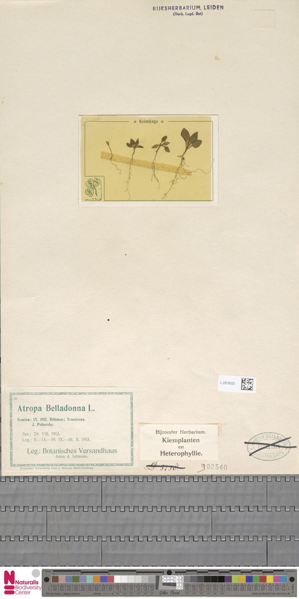 L.2876032 | Atropa belladonna L.