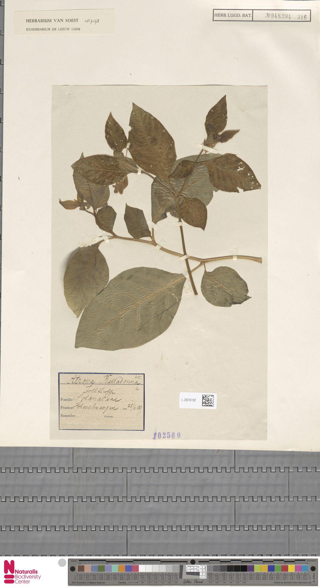 L.2876192 | Atropa belladonna L.