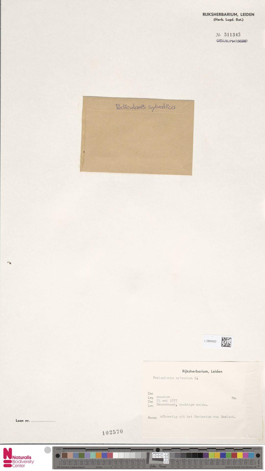 L.2884932 | Pedicularis sylvatica L.