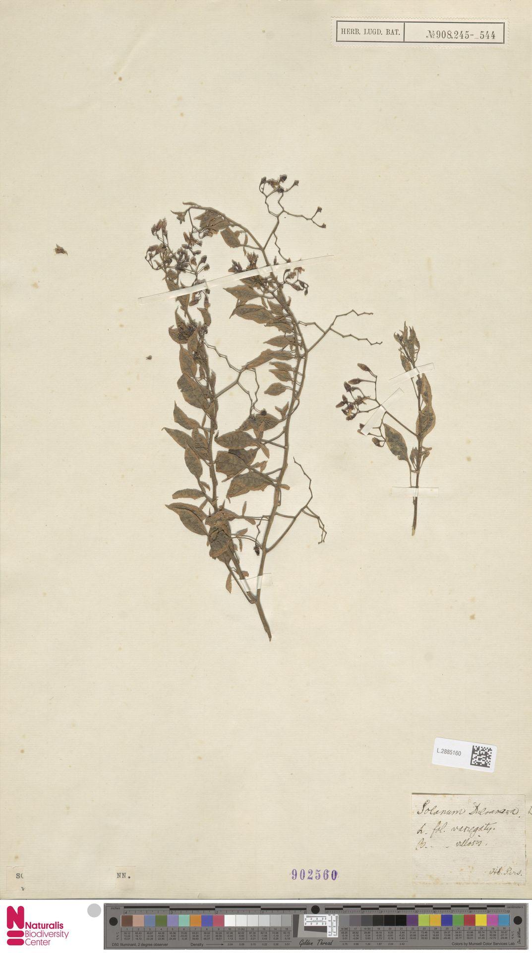 L.2885160 | Solanum dulcamara L.