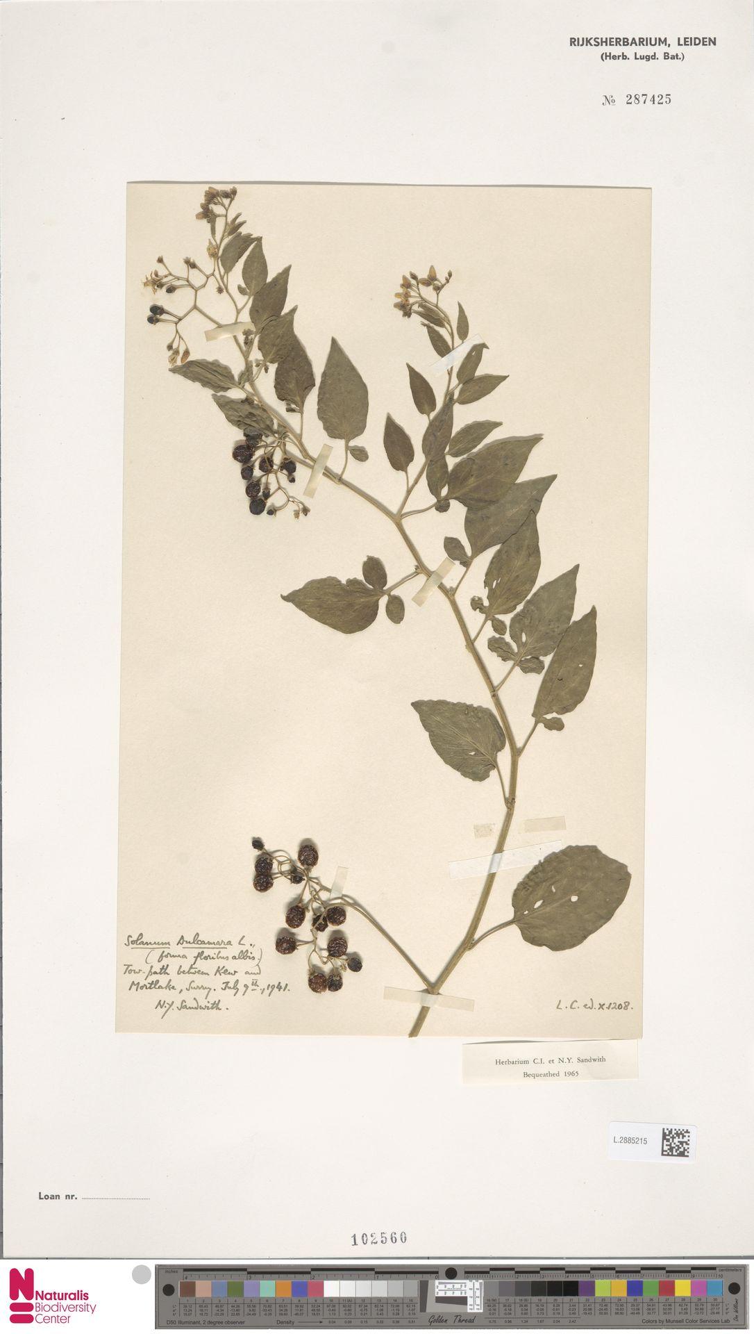 L.2885215 | Solanum dulcamara L.