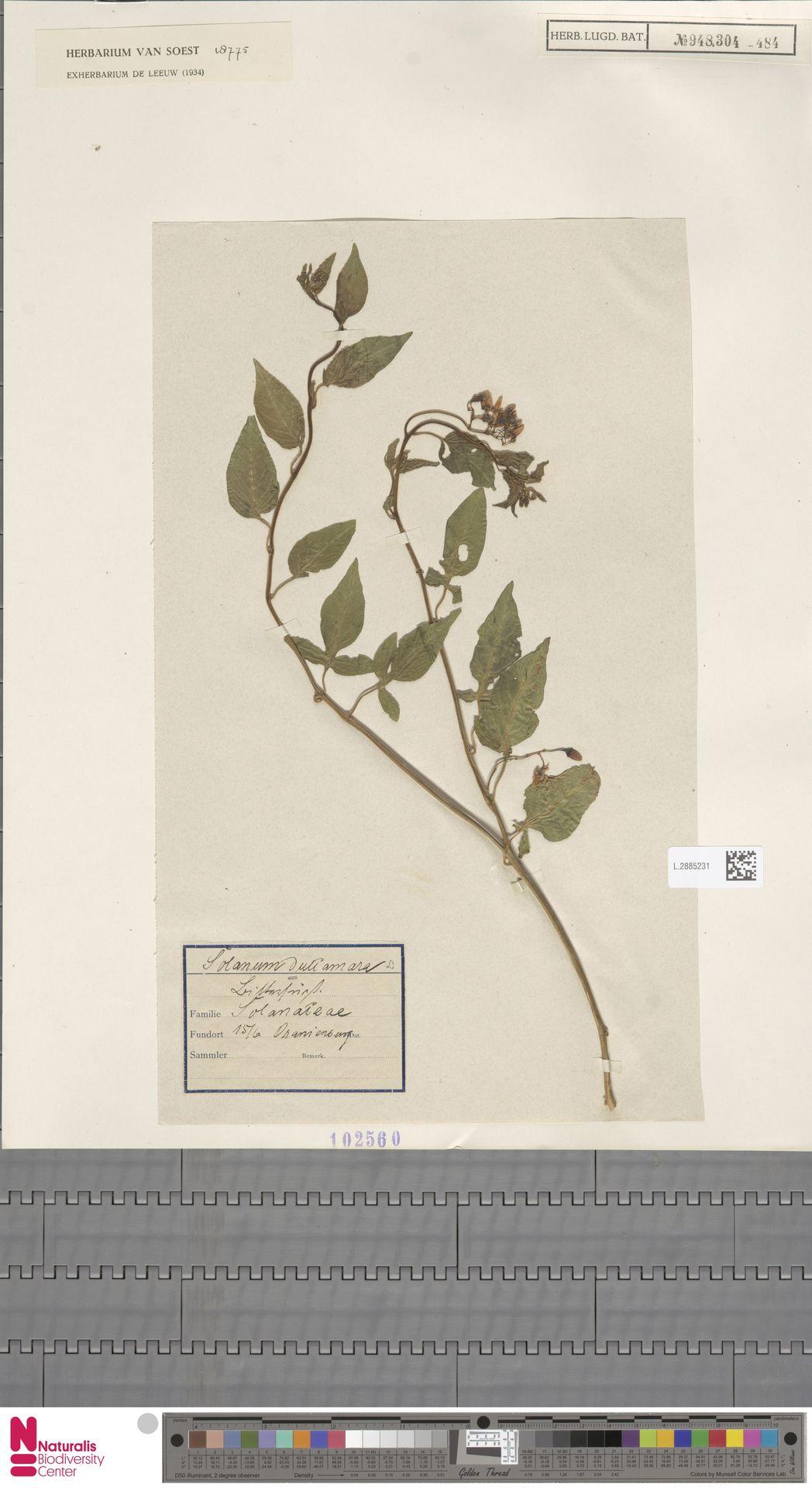 L.2885231 | Solanum dulcamara L.