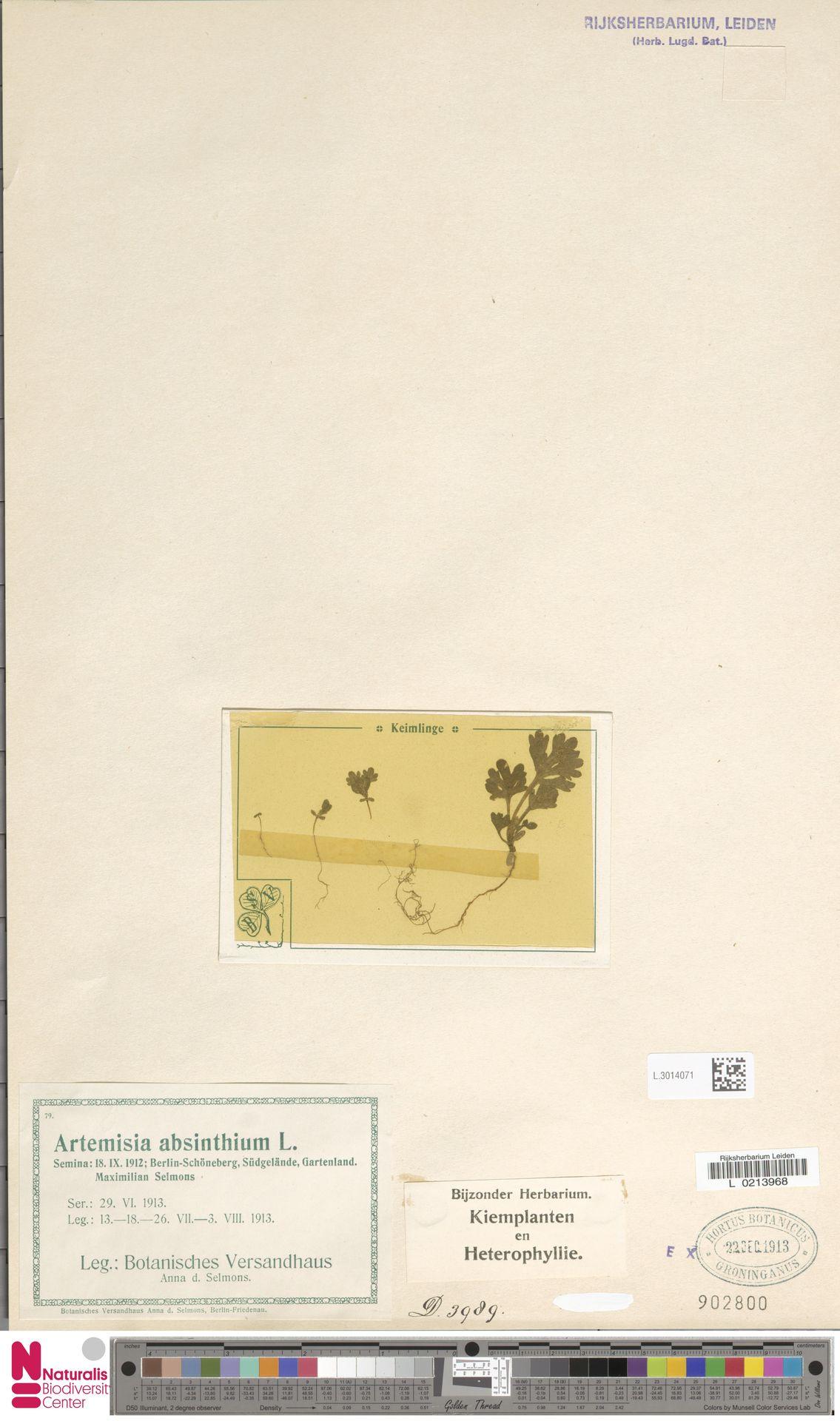 L.3014071 | Artemisia absinthium L.