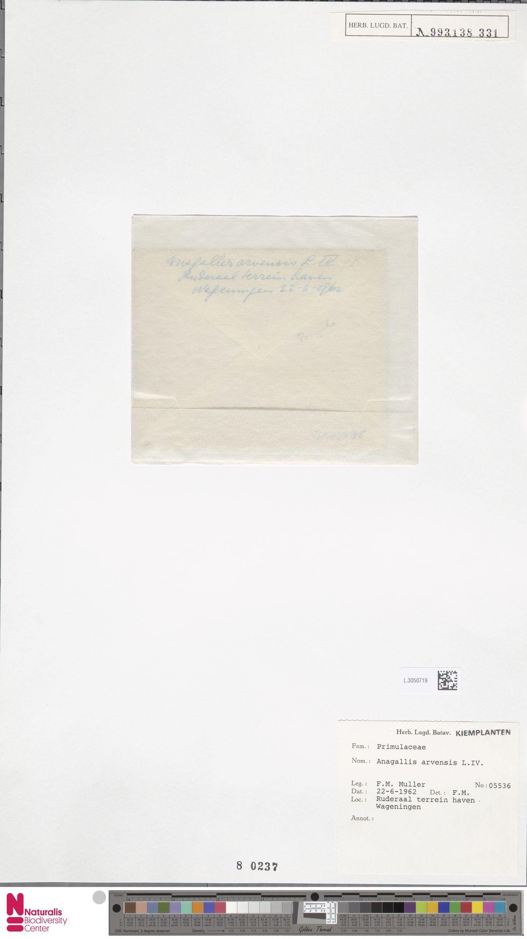L.3050719   Anagallis arvensis L.
