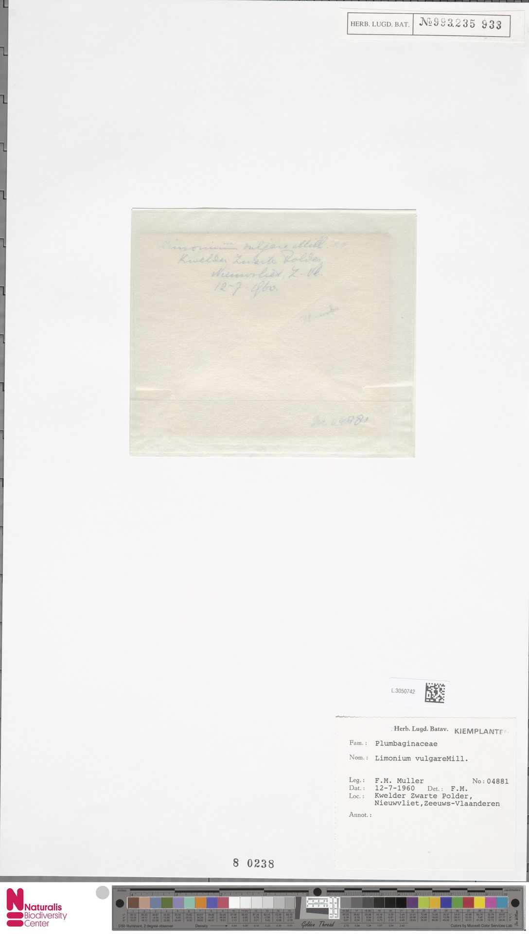 L.3050742 | Limonium vulgare Mill.