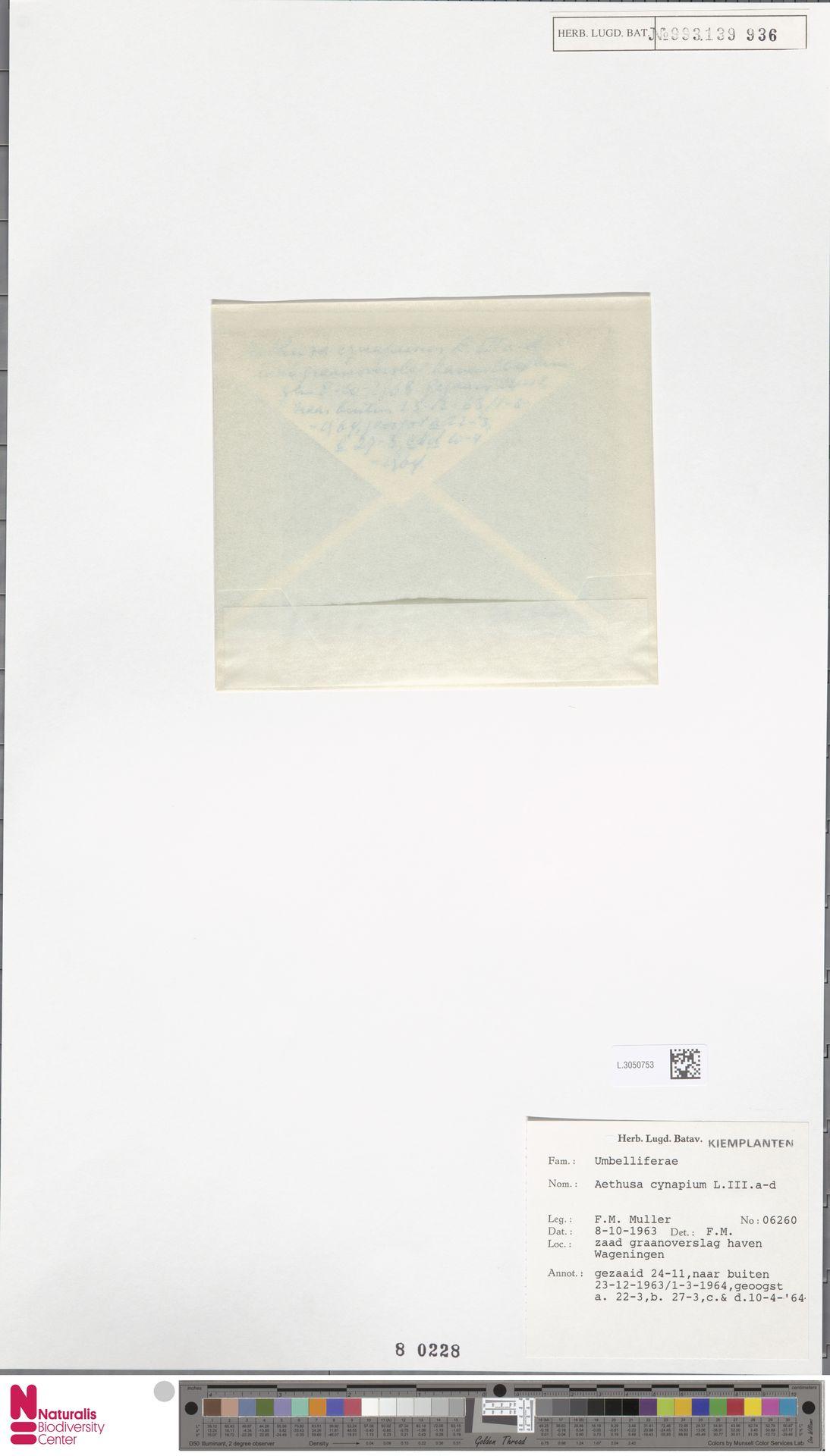 L.3050753 | Aethusa cynapium L.