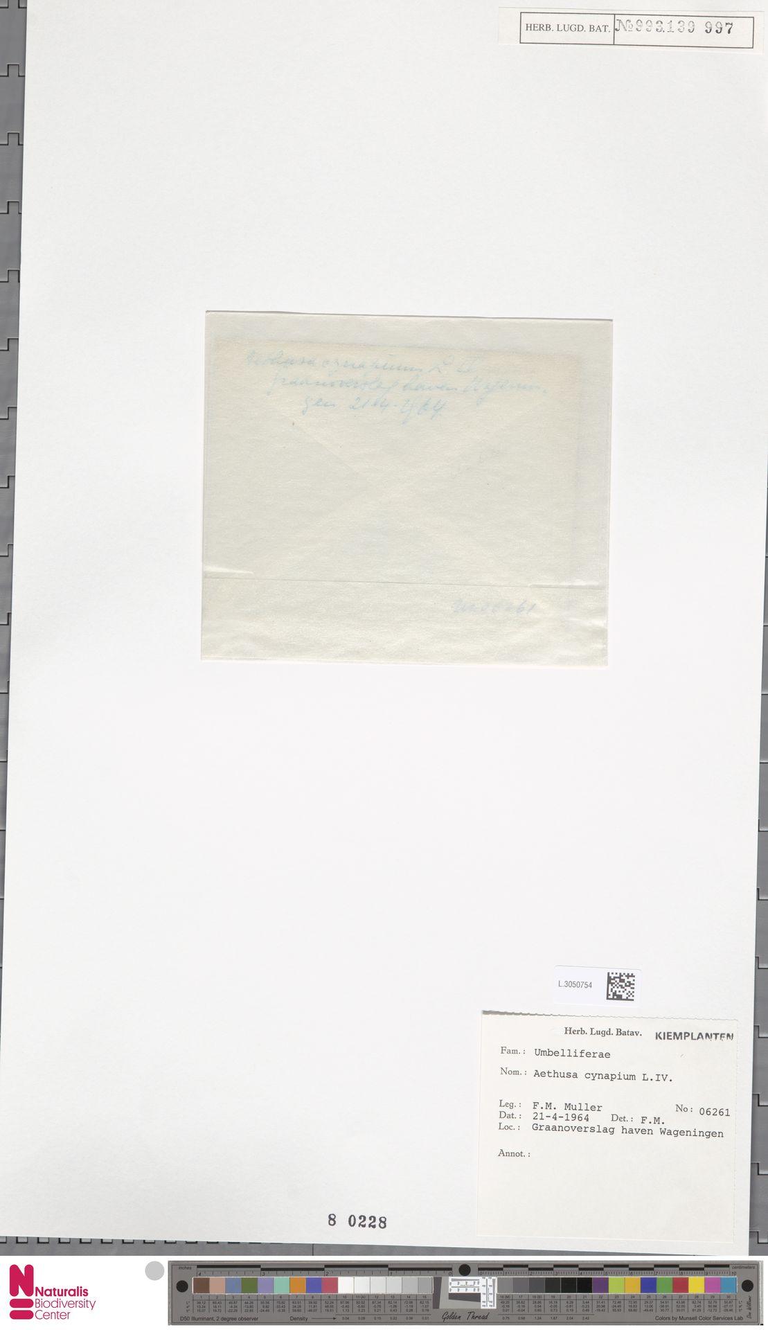 L.3050754 | Aethusa cynapium L.