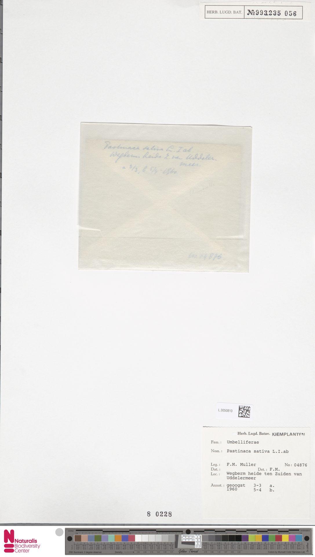 L.3050810   Pastinaca sativa L.