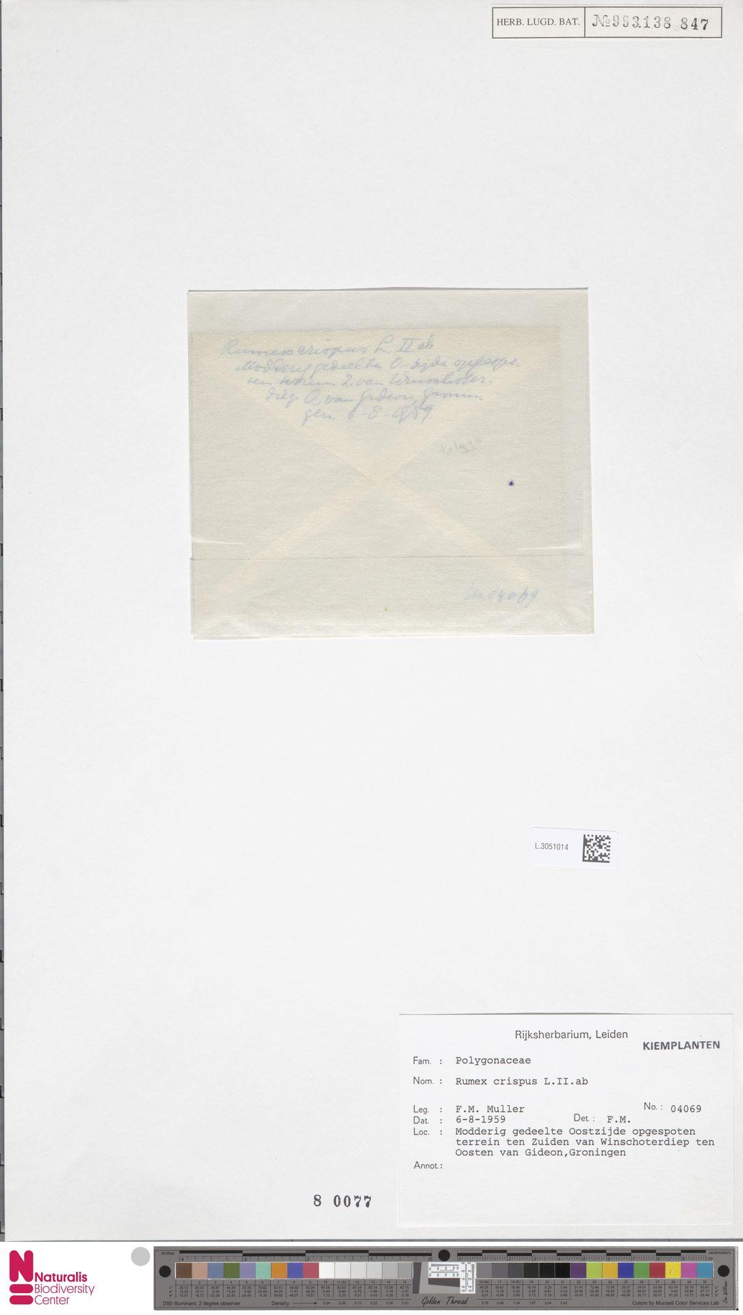 L.3051014 | Rumex crispus L.