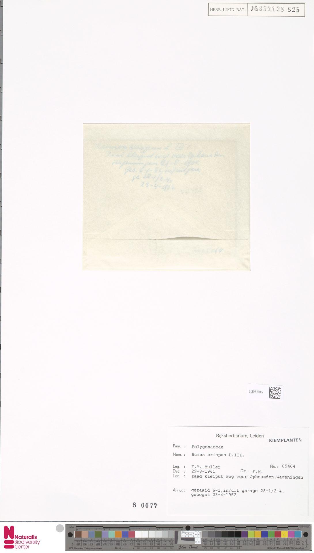 L.3051015 | Rumex crispus L.