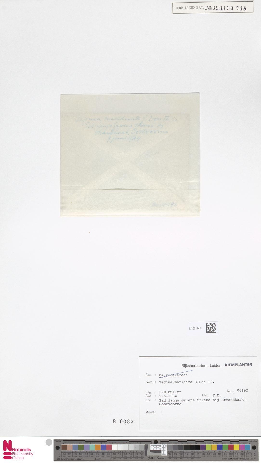 L.3051145 | Sagina maritima G.Don
