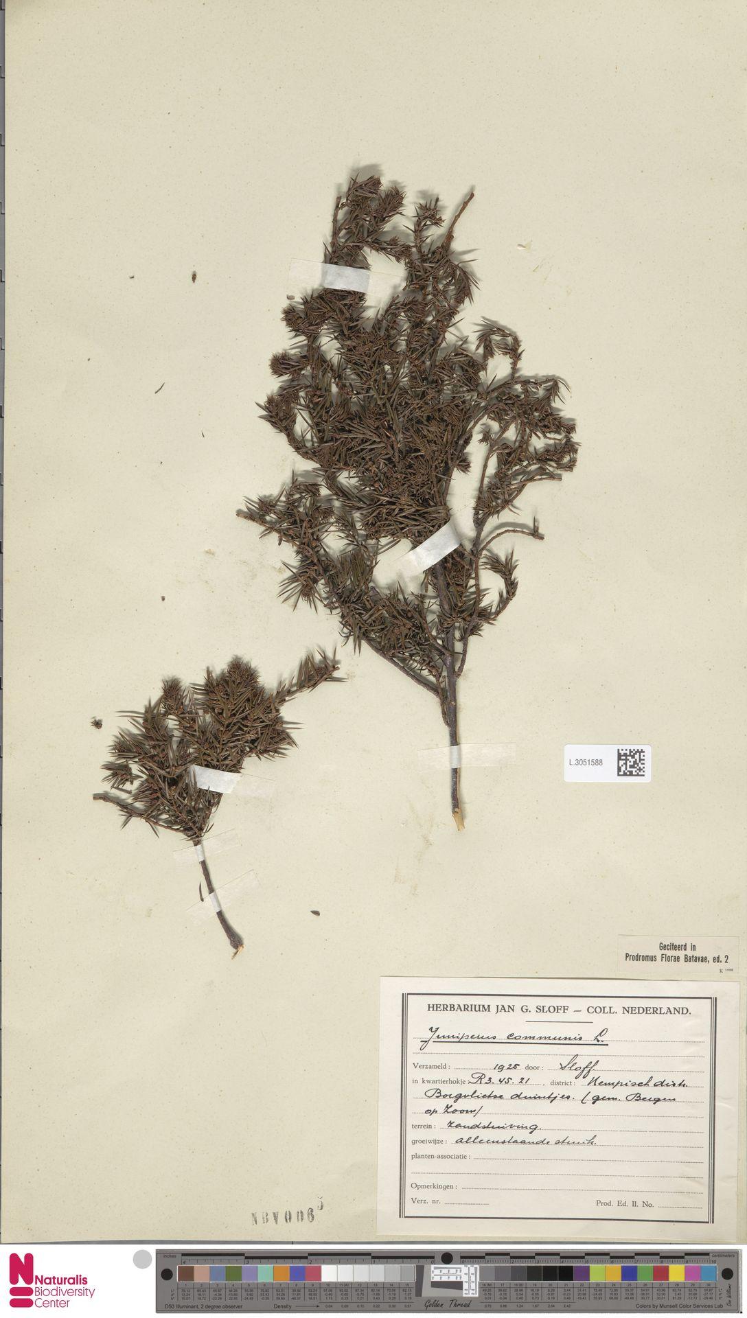 L.3051588 | Juniperus communis L.