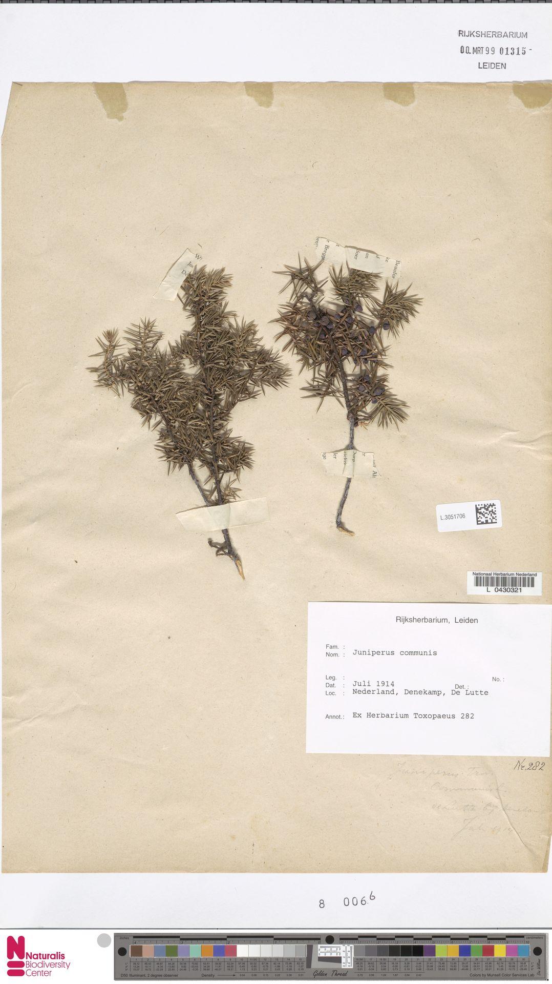 L.3051706 | Juniperus communis L.