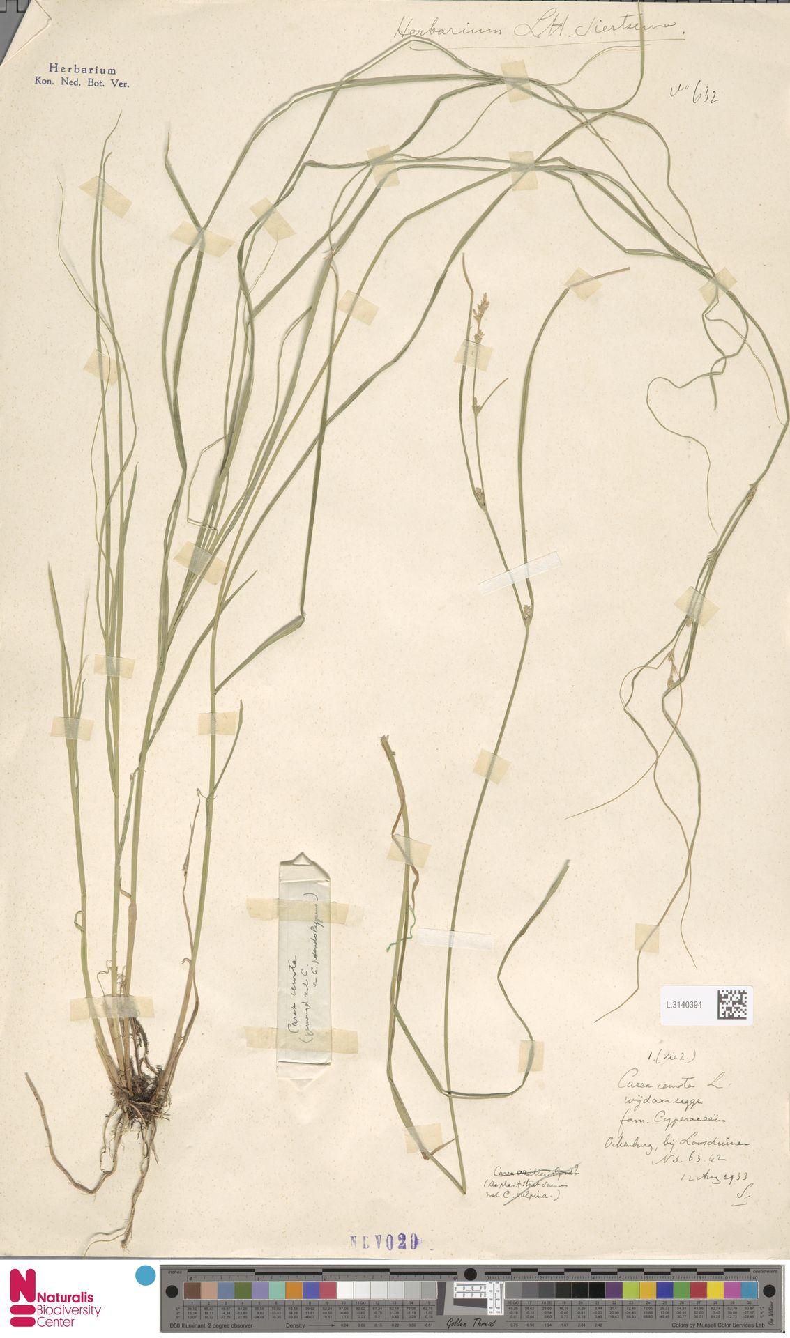 L.3140394 | Carex remota L.