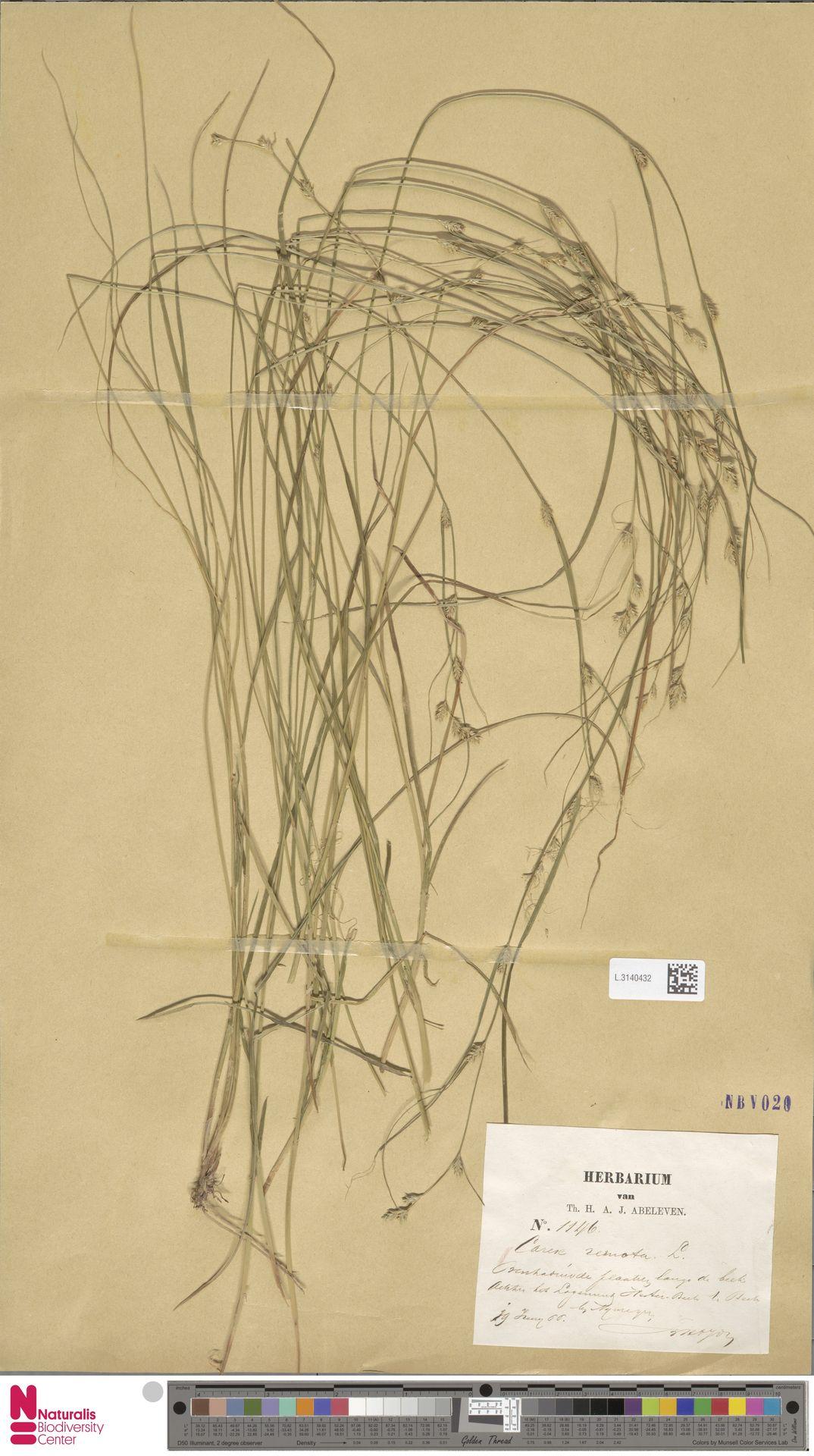L.3140432 | Carex remota L.
