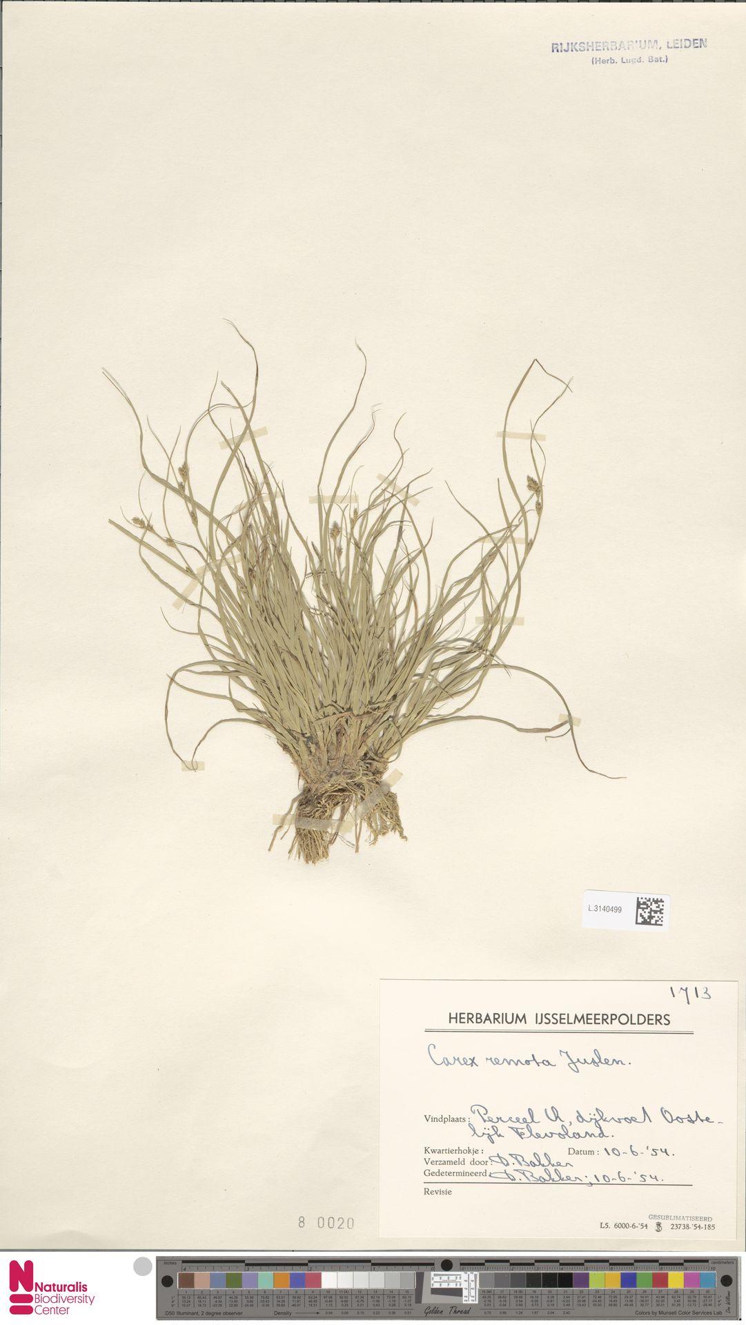 L.3140499 | Carex remota L.