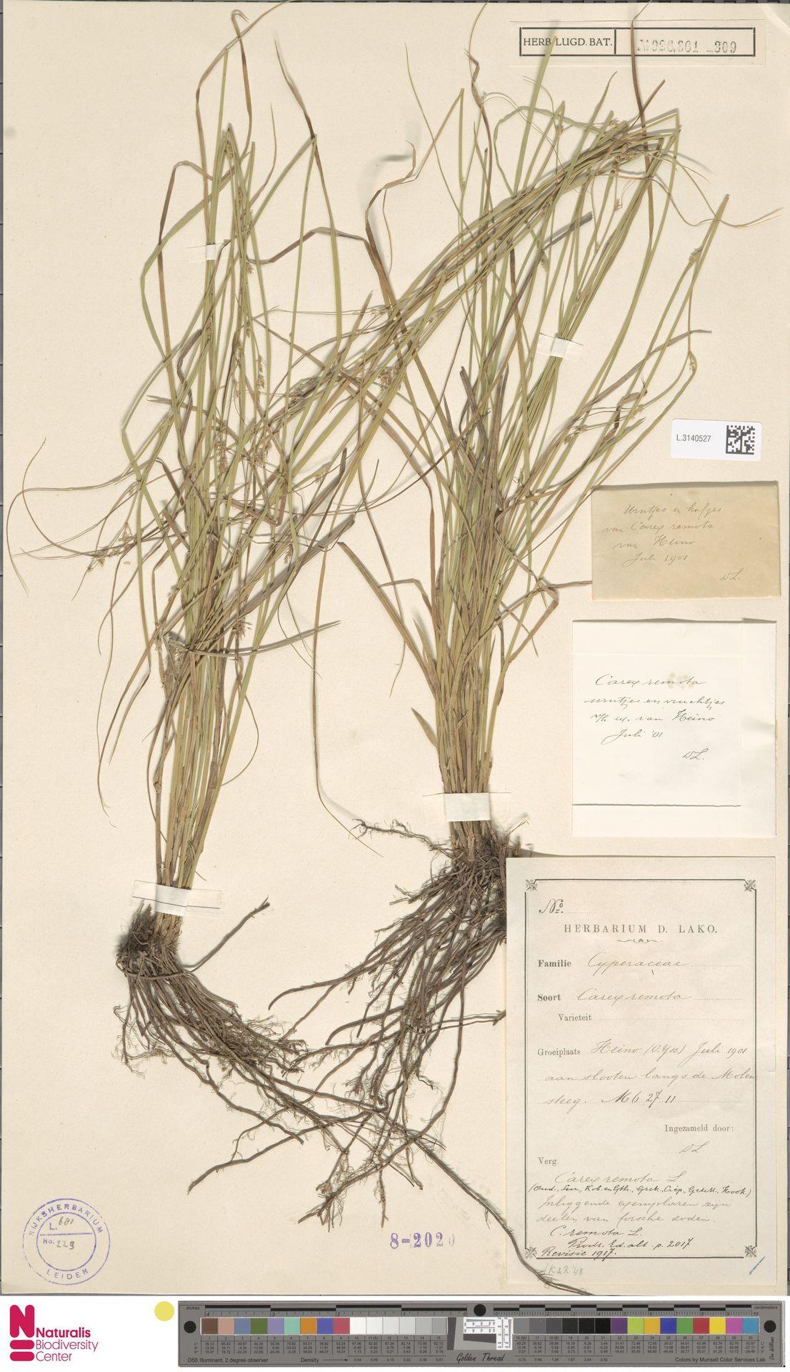 L.3140527   Carex remota L.