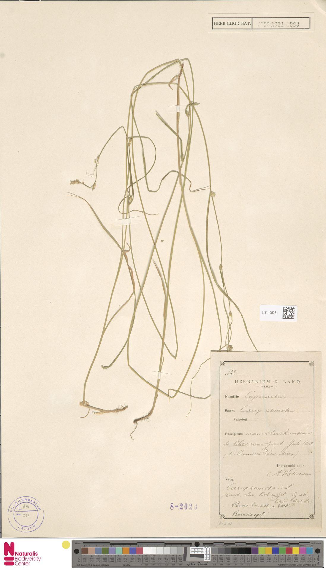 L.3140528 | Carex remota L.