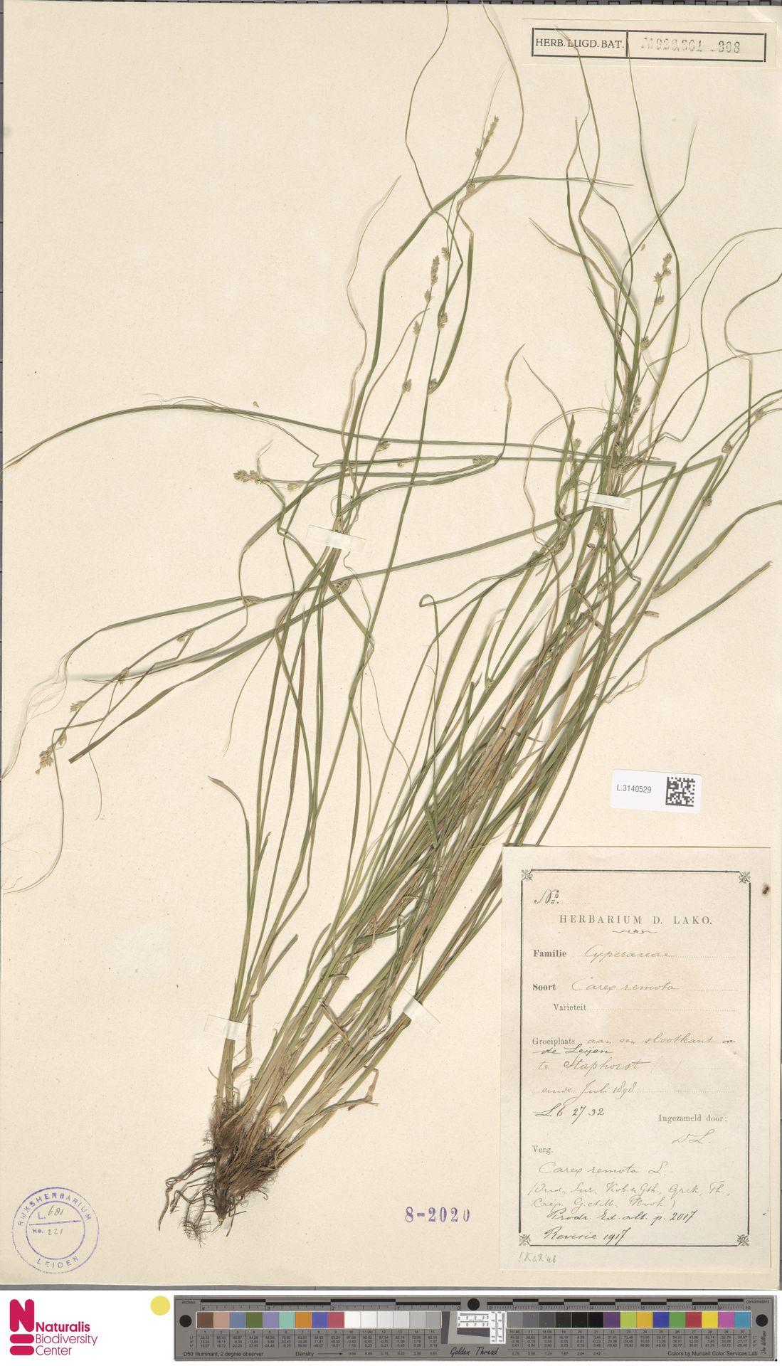 L.3140529 | Carex remota L.