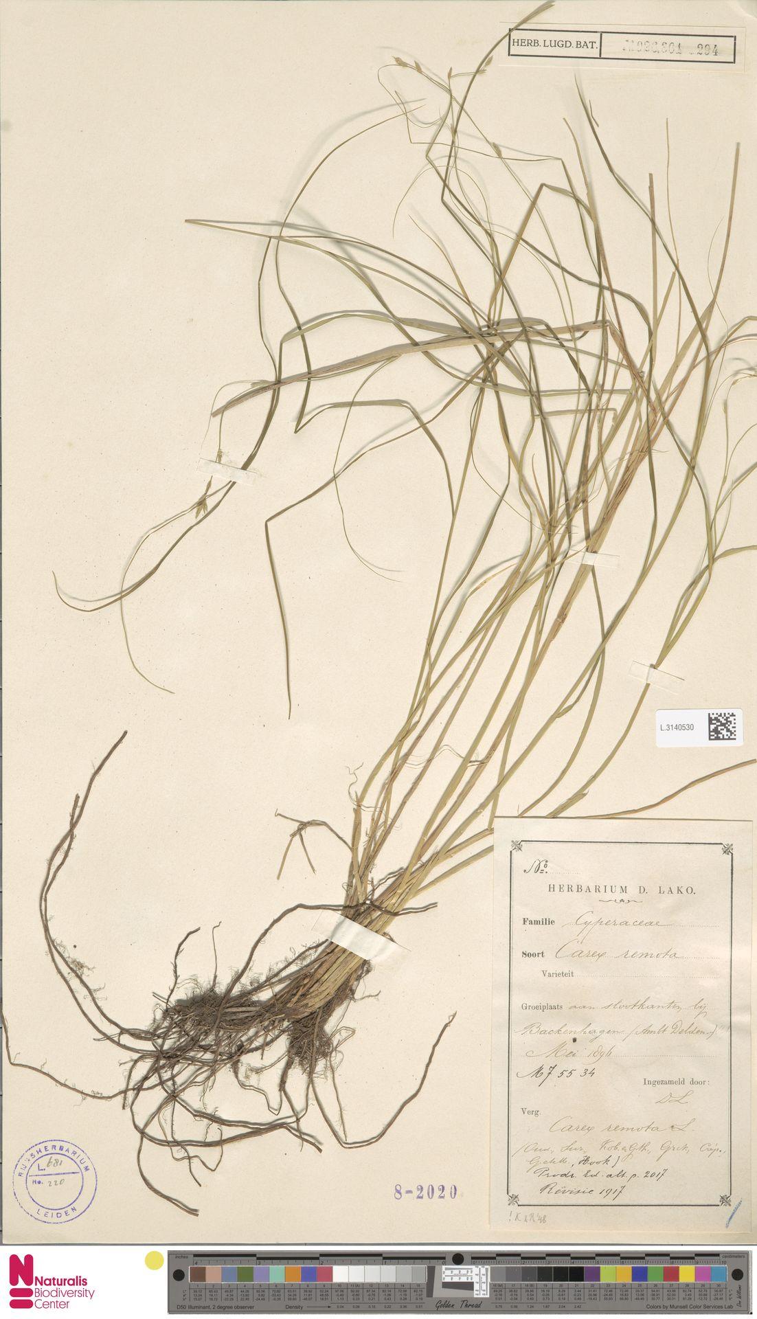 L.3140530 | Carex remota L.