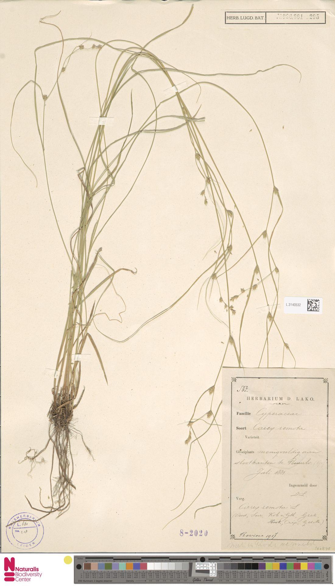 L.3140532 | Carex remota L.