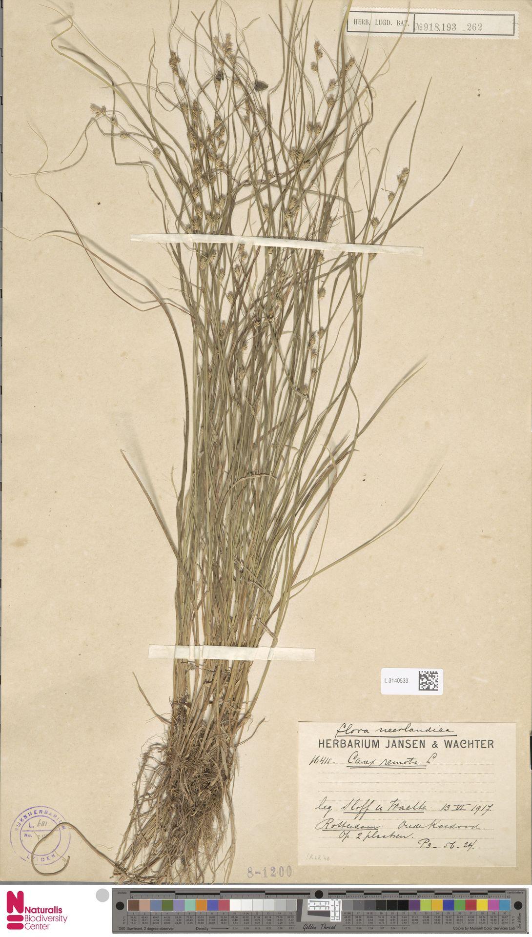 L.3140533 | Carex remota L.