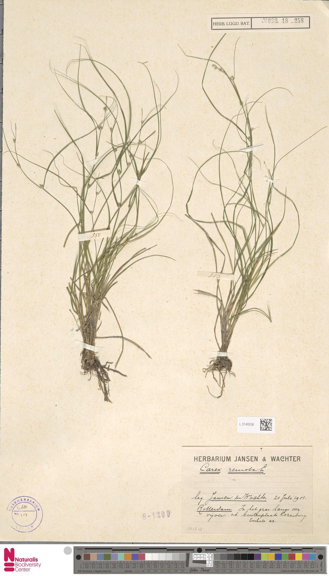 L.3140536 | Carex remota L.