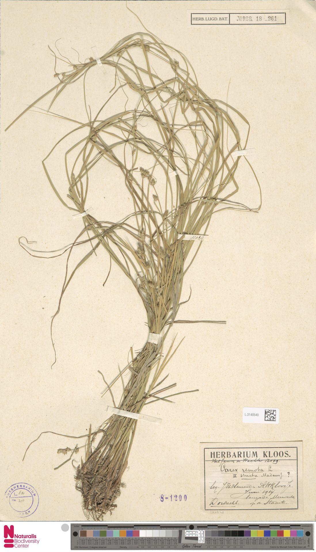 L.3140540 | Carex remota L.