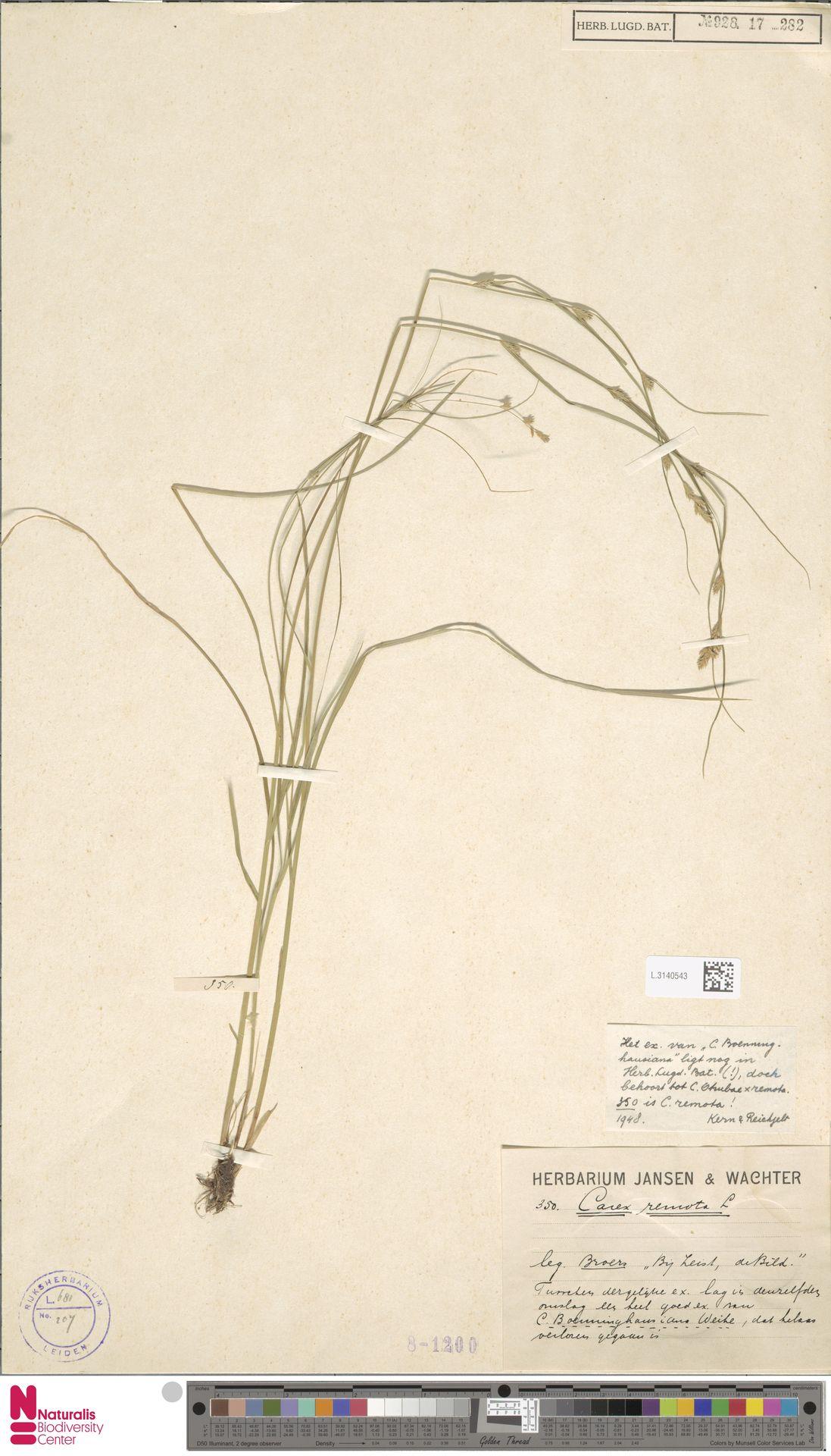 L.3140543 | Carex remota L.