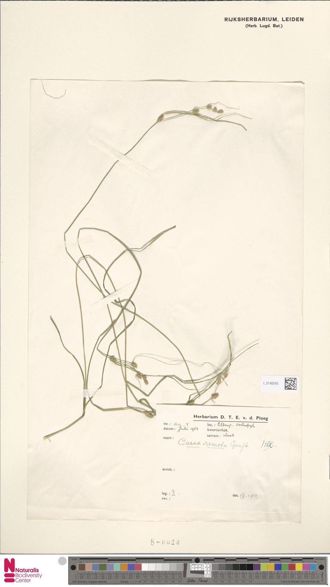 L.3140545 | Carex remota L.