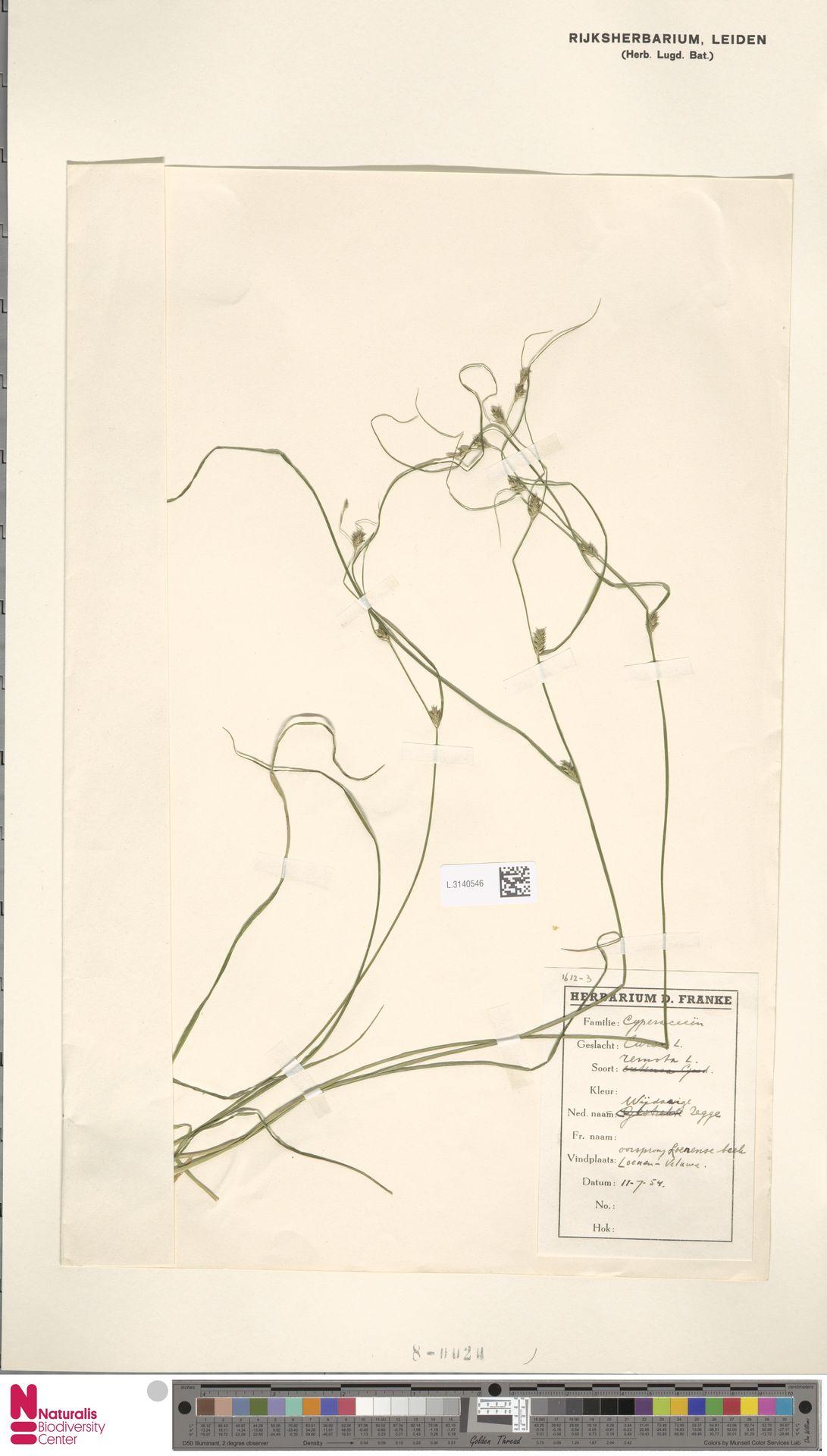 L.3140546 | Carex remota L.