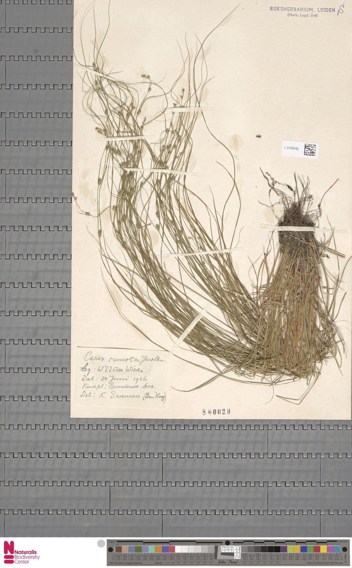 L.3140548 | Carex remota L.