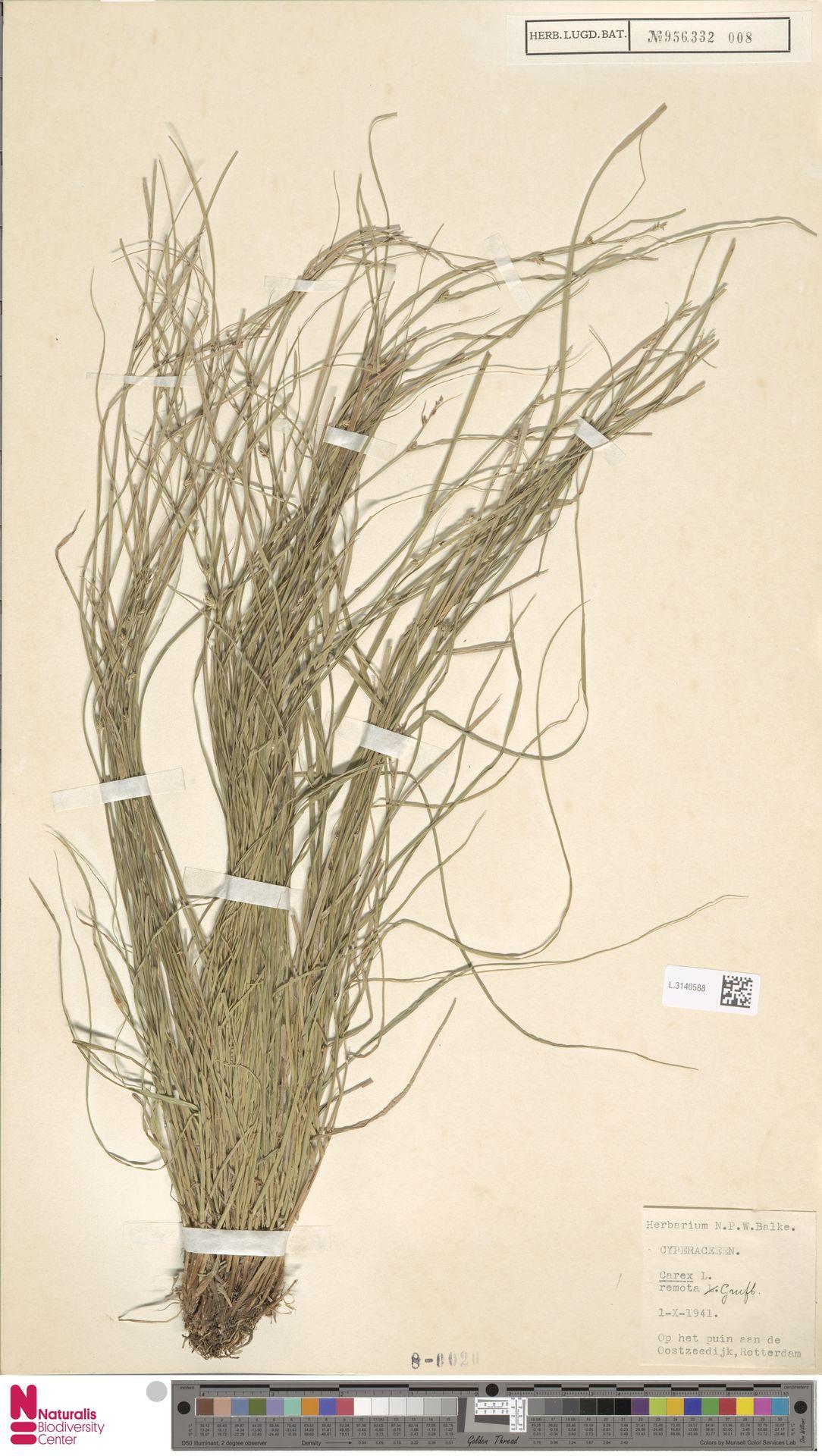 L.3140588 | Carex remota L.