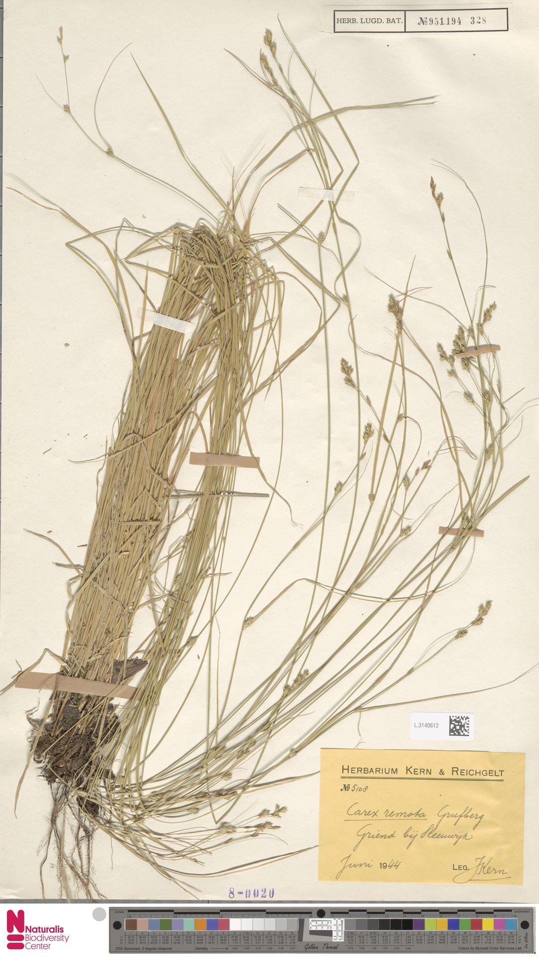 L.3140612 | Carex remota L.