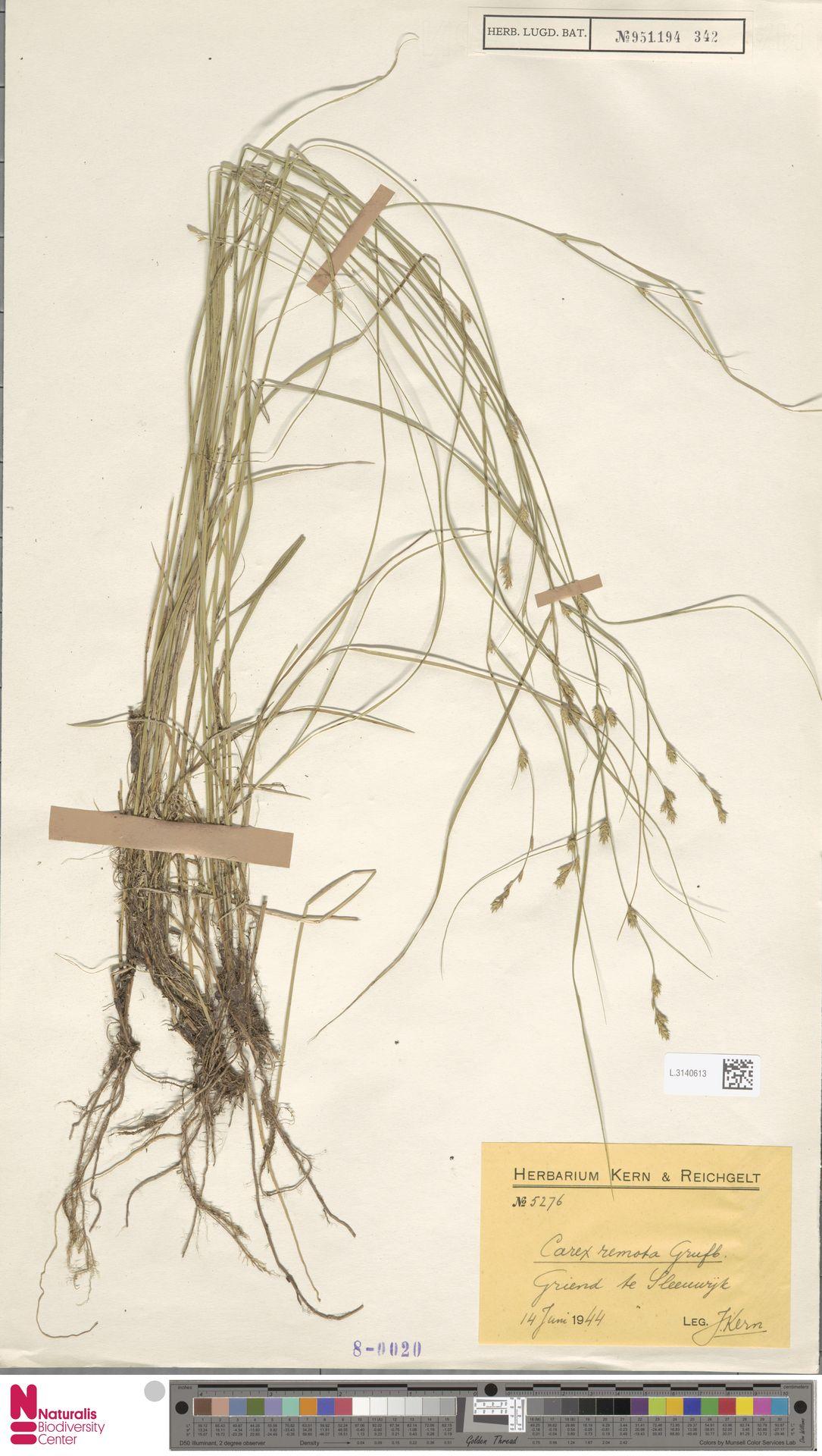L.3140613 | Carex remota L.