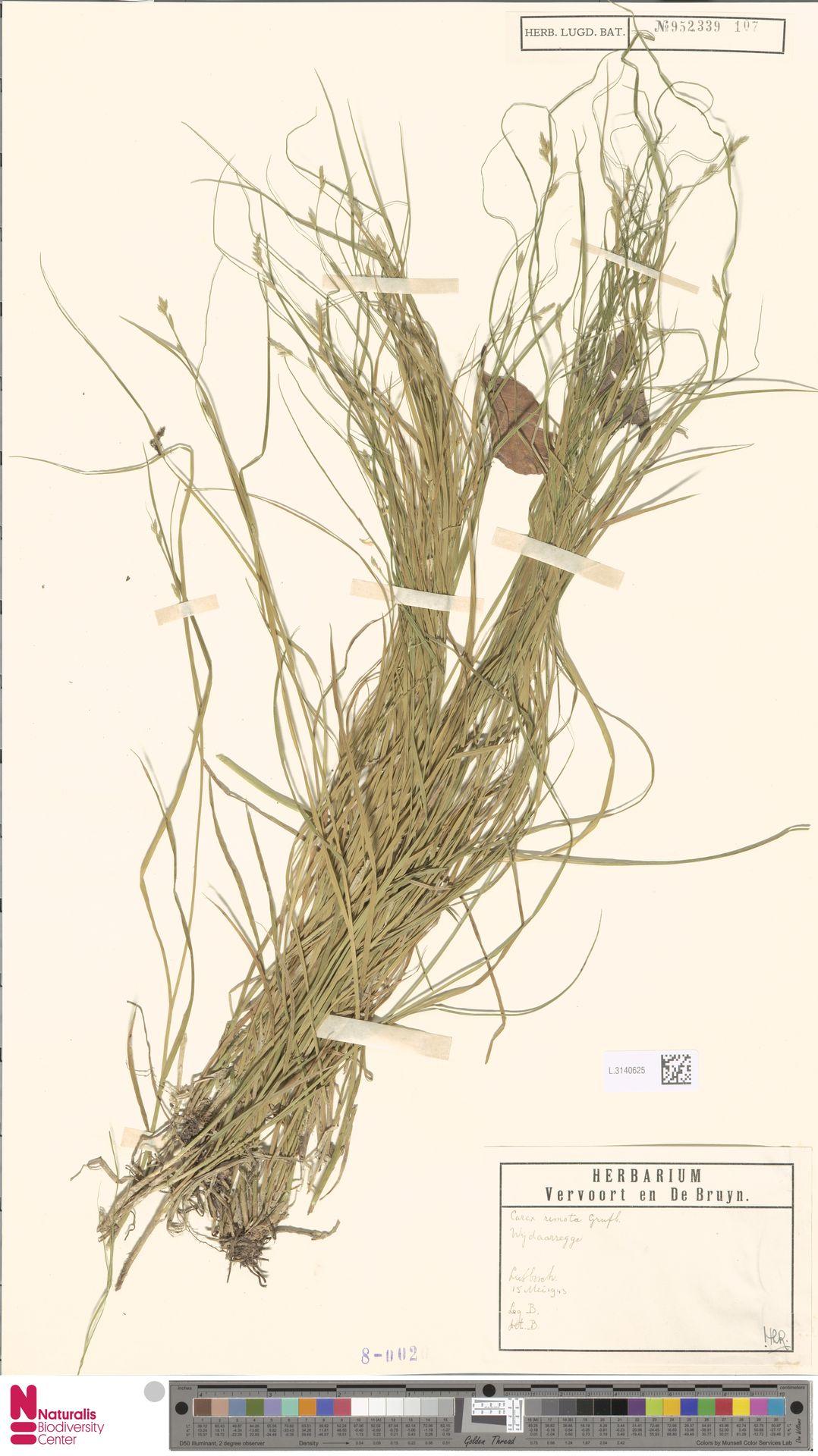 L.3140625 | Carex remota L.