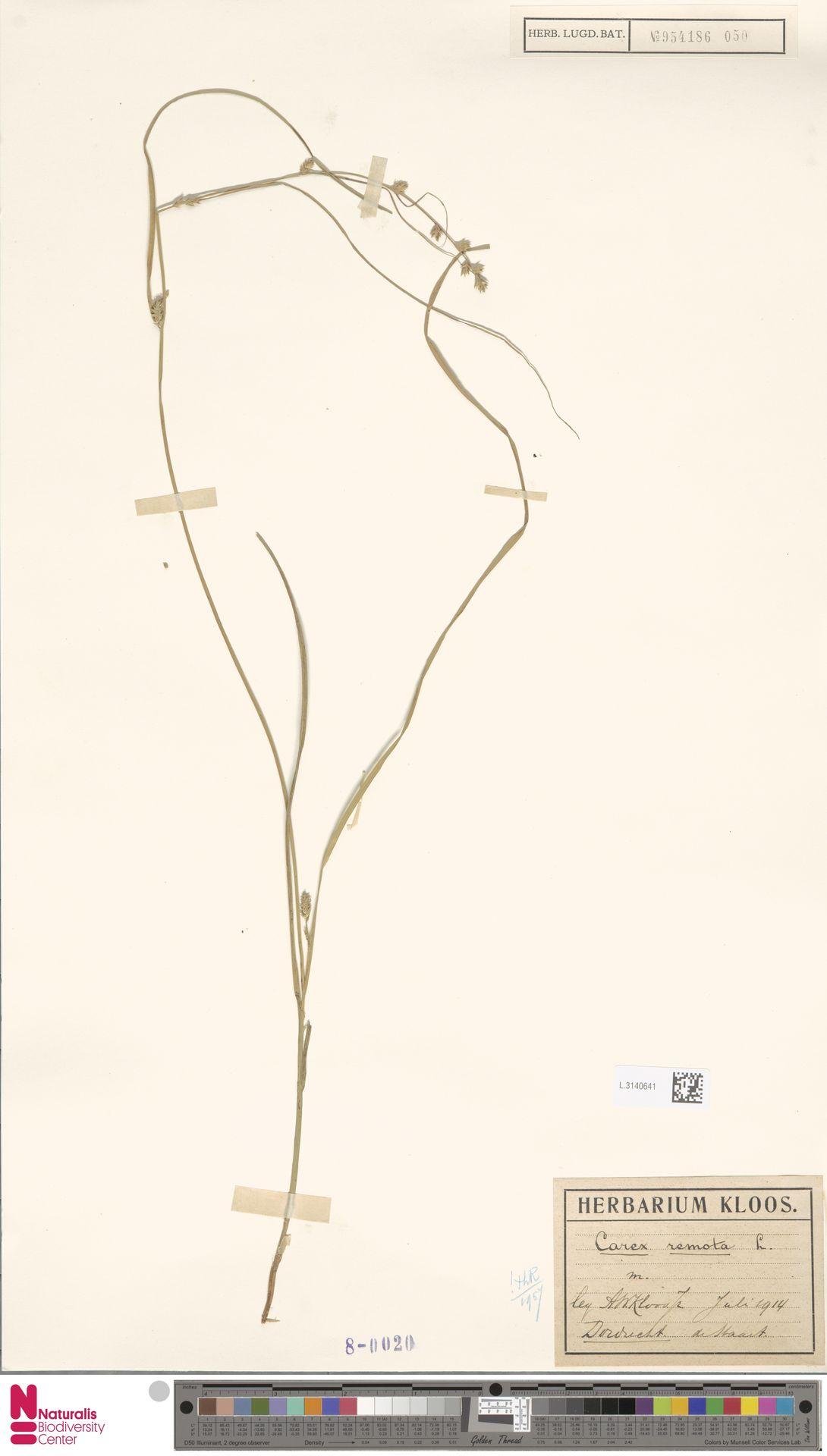 L.3140641 | Carex remota L.